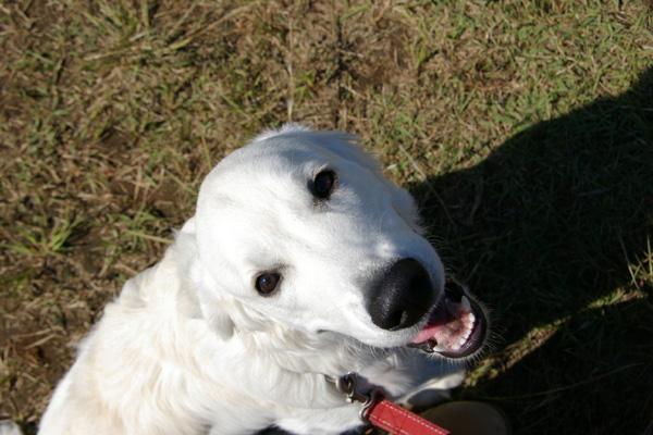 白い犬.jpg